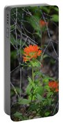Indian Paint Brush 2 Portable Battery Charger