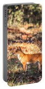 Indian Wild Dogs Dholes Kanha National Park India Portable Battery Charger
