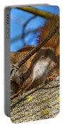 Inquisitive Squirrel Portable Battery Charger