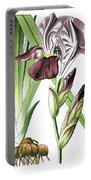 Iris Germanica, The German Iris Portable Battery Charger