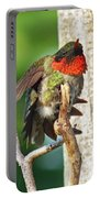 I've Got An Itch - Ruby-throated Hummingbird Portable Battery Charger
