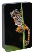 Ivory Coast Running Frog  Ghana Portable Battery Charger