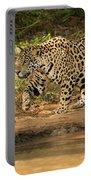 Jaguar Walking Beside River In Dappled Sunlight Portable Battery Charger