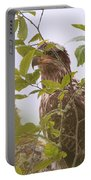 Juvenile Bald Eagle In Leaves Portable Battery Charger