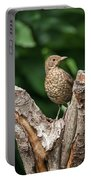 Juvenile Black Bird Turdus Merula Fledgling In Tree Stump In For Portable Battery Charger