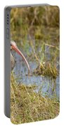 Juvenile White Ibis In The Everglades Portable Battery Charger