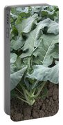 Kale Portable Battery Charger