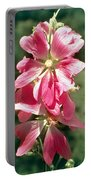 Kashmir Tree Mallow  Portable Battery Charger