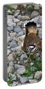 Kildeer And Eggs Portable Battery Charger