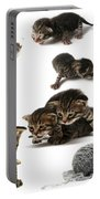 Kitten Collage Portable Battery Charger