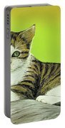 Kitten On Rock Portable Battery Charger