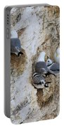Kittiwakes Tend Their Chicks At Rspb Bempton Cliffs Portable Battery Charger