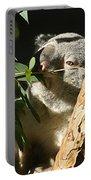 Koala Bear 3 Portable Battery Charger