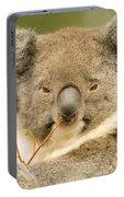 Koala Snack Portable Battery Charger
