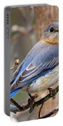 Lady Blue Portable Battery Charger