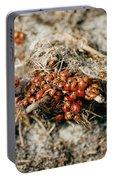 Ladybugs En Masse Portable Battery Charger