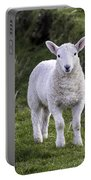 Lamb On The Isle Of Skye Portable Battery Charger