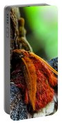 Large Moth Macro Portable Battery Charger