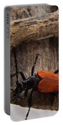 Laughing Beetle Portable Battery Charger