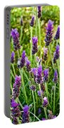 Lavender At Pilgrim Place In Claremont-california Portable Battery Charger