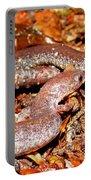 Leadback Salamander Pair Portable Battery Charger