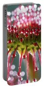 Leaf Of Sundew Portable Battery Charger by Nuridsany et Perennou and Photo Researchers