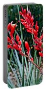 Lechuguilla Agave At Pilgrim Place In Claremont-california  Portable Battery Charger