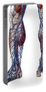 Leg Blood Vessels, Anatomical Portable Battery Charger