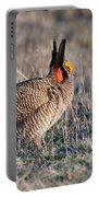 Lesser Prairie Chicken Displaying Portable Battery Charger