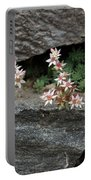 Life On Bare Rock - Pale Pink Succulents On The Wall Portable Battery Charger