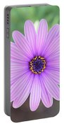 Light Purple Gazania Macro 1  Portable Battery Charger