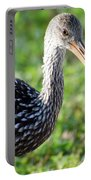 Limpkin Checking For Snails. Portable Battery Charger