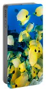 Lined Butterflyfish Portable Battery Charger