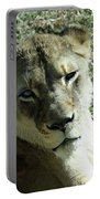 Lioness Peering Portable Battery Charger
