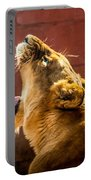 Lioness Yawn Portable Battery Charger