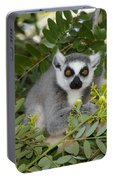 Little Ring-tailed Lemur Portable Battery Charger