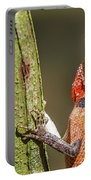 Lizard In Maldive Portable Battery Charger