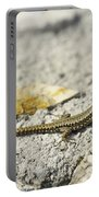 Lizard Portable Battery Charger