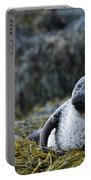 Loch Dunvegan's Harbor Seal Portable Battery Charger