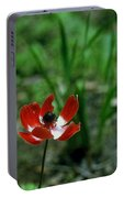 Lone Beauty Portable Battery Charger
