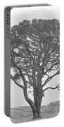 Lone Scots Pine, Crannoch Woods Portable Battery Charger