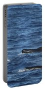 Long-finned Pilot Whales Portable Battery Charger