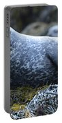 Long Whiskers On A Harbor Seal Portable Battery Charger