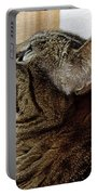 Look Out Window Tabby Cat Portable Battery Charger