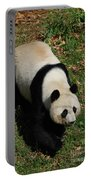 Looking Down At A Cute Giant Panda Bear Portable Battery Charger