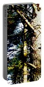 Looking Skyward Portable Battery Charger