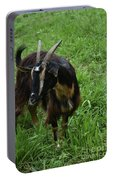 Lovely Billy Goat With Silky Black And Brown Fur Portable Battery Charger