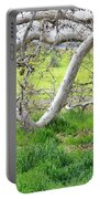 Low Branches On Sycamore Tree Portable Battery Charger