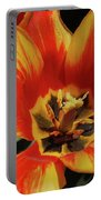 Macro Of A Blooming Striped Yellow And Red Tulip Portable Battery Charger