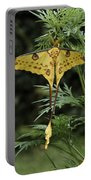 Madagascar Comet Moth Portable Battery Charger